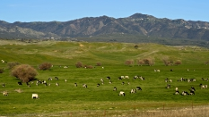 Cattle country, San Diego County