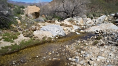 Cougar Canyon stream Anza Borrego