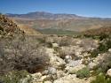 Cougar Canyon Anza Borrego Desert