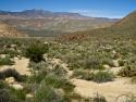 Path to Cougar Canyon Anza Borrego