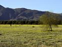 Wildflowers Anza Borrego Desert Super Bloom