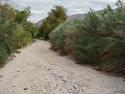 Lower Willows Trail Anza Borrego