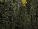 TreesinthefallturningcolorGrandCanyon